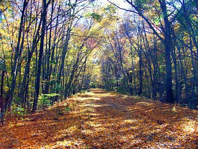 Photo of the AirLine Trail in Chaplin, Connecticut, with orange leaves covering the trail