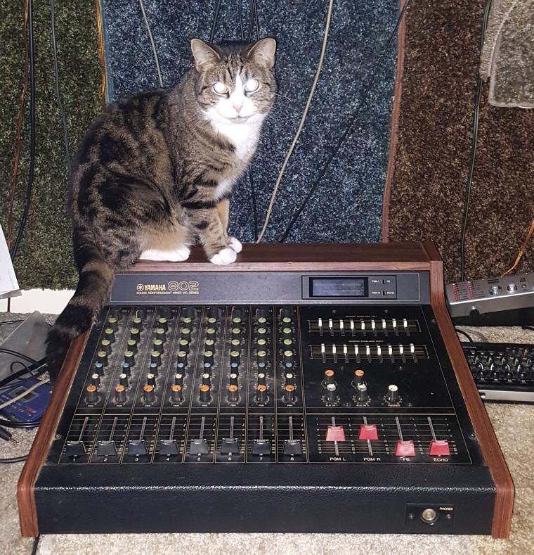 Photo of Radio Cat Phoebe